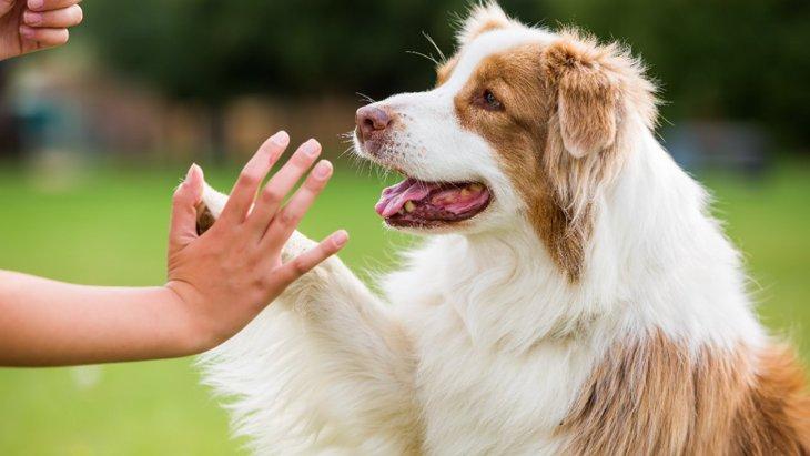 犬が人に『恐怖』を感じている時の行動5選!怖がらせない方法とは?