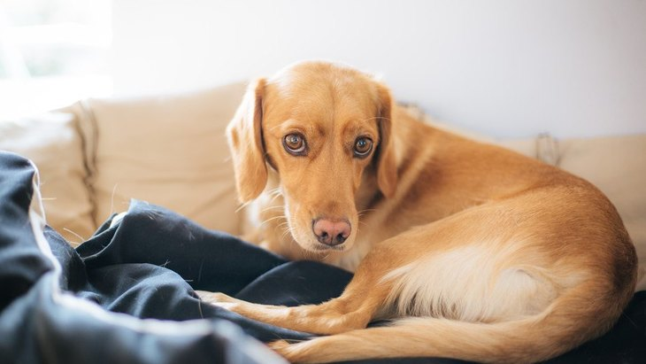 犬が『キャンッ』と鳴く心理4つ