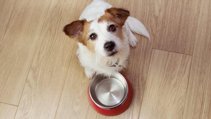 犬がご飯を要求している時にするべきではないNG行為3選