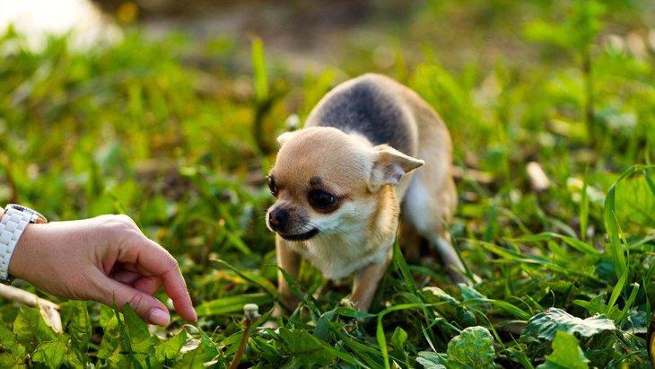 『人が大好きな犬』に育てる3つの方法