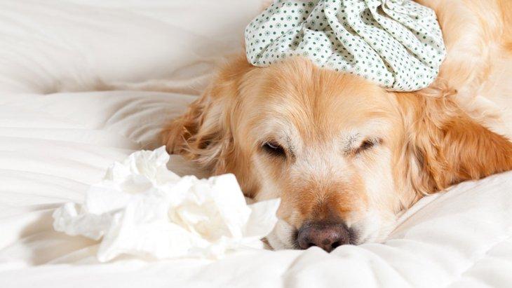 犬も雨に濡れたら風邪をひくの?