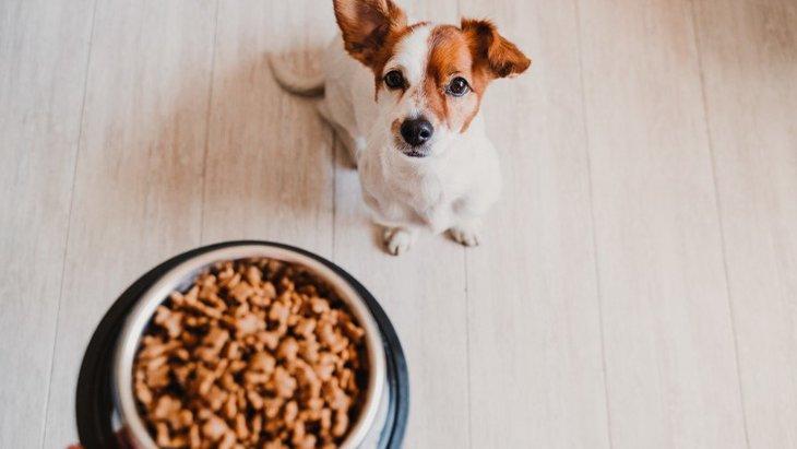 犬がごはんを残す時に考えられる理由4つ