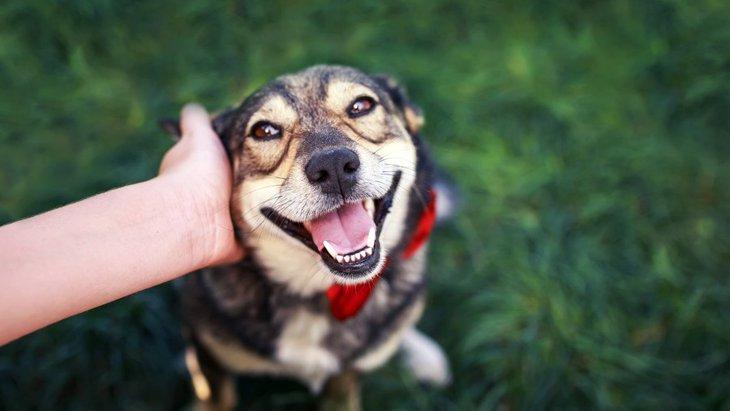 構ってほしいの?犬が人に頭をグイグイ押し付けてくるときの心理5つ
