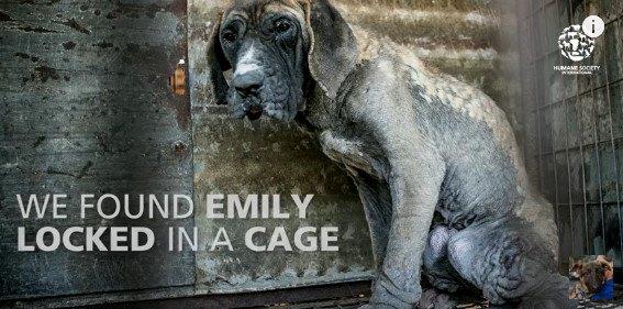 犬肉食の是非だけではない。犬が健康に生きる権利が奪われた犬農場の環境