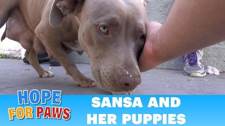 穏やかな母犬はすぐに保護。床下にもぐって7匹の子犬たちも回収完了!