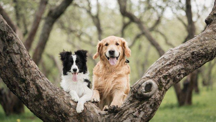 犬の飼い主が知っておくべき『4つのこと』