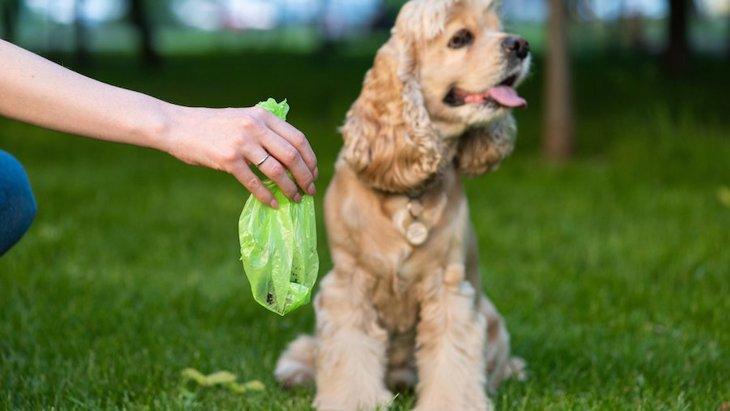 なぜ?犬が自分のウンチを食べる理由5つ