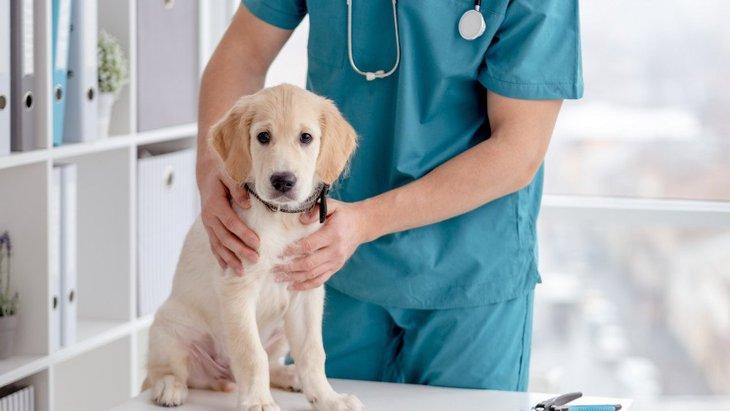 犬が『肌トラブル』を起こしている時のサイン7選!病院に行くべき基準は?