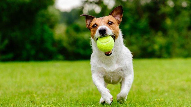 気づいてあげてる?愛犬が『遊びたい』時にする仕草5つ