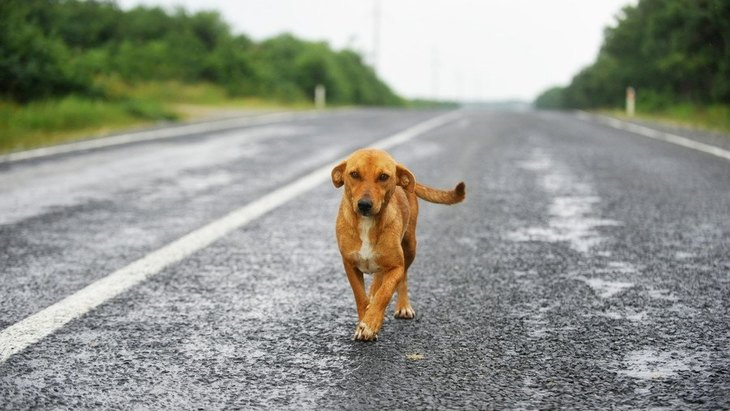 迷子犬を見つけたらどうすればいい?対応と注意点