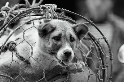 犬猫の販売業者を取り締まる新たな動き。果てしてこれが犬猫の幸せにつながるのか