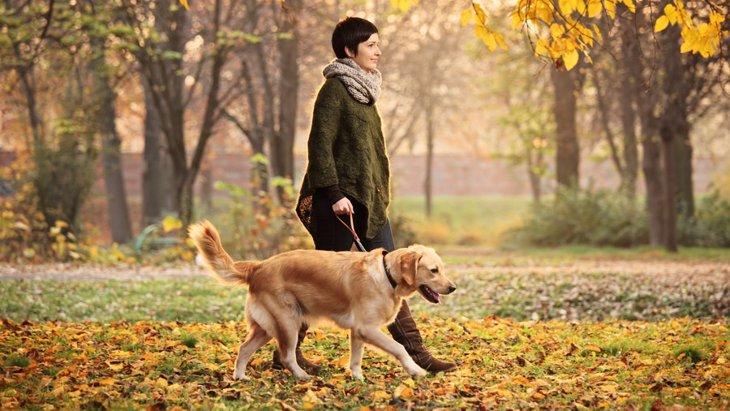 犬を飼うと寿命が延びる?研究で明らかに