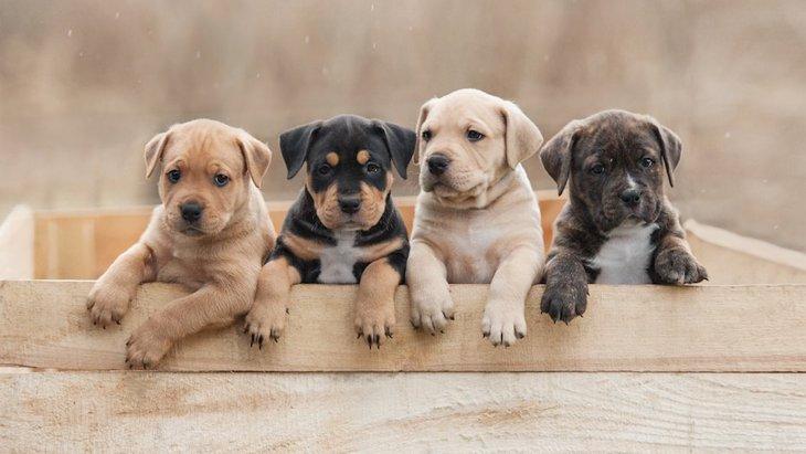 犬の多頭飼いがしたい!二匹目を迎えるタイミングと注意点