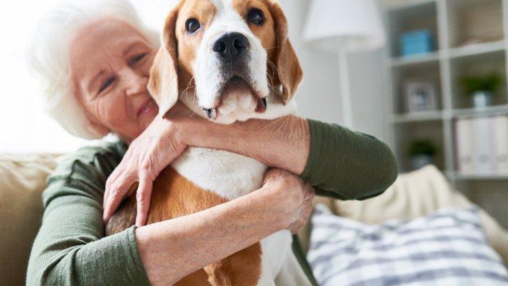 犬の寿命が大幅に短くなる絶対にしてはいけないNG行為4選