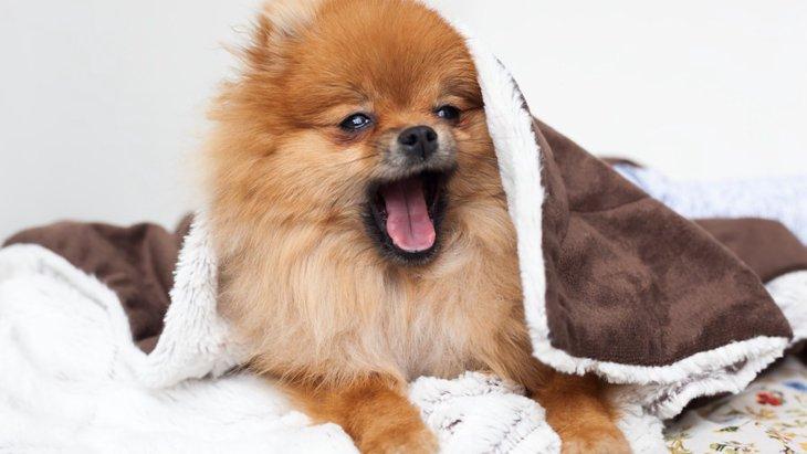 愛犬に刺激は足りてる?犬は退屈だと脳が縮むらしい