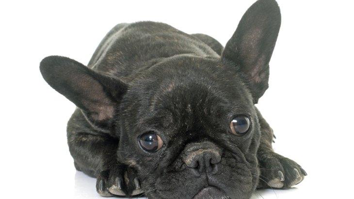 犬の斜視について