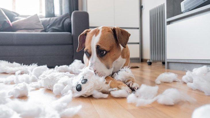 愛犬が問題行動を起こすようになる『絶対NGな飼い方』5選