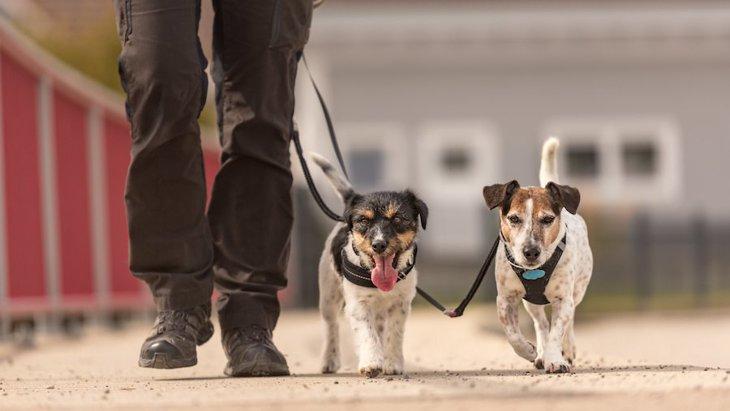 犬が喜ぶ散歩の仕方!愛犬との散歩の時間を楽しむコツ