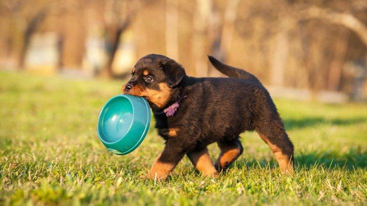 犬が栄養失調になってしまう『ご飯の与え方』4選!極端なダイエットは命の危険も
