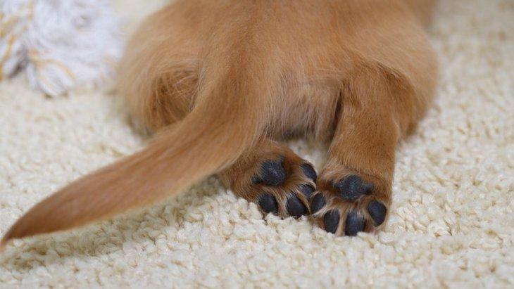 犬の肉球をマッサージするやり方と期待できる効果
