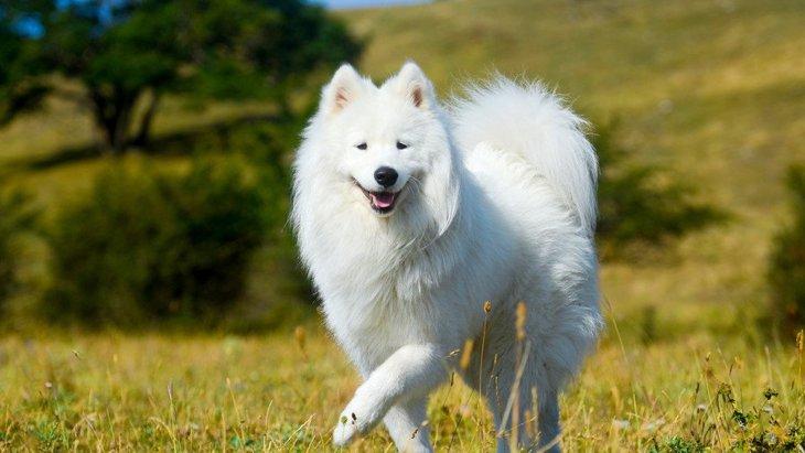 インスタフォロワー爆発中の山P!ドラマで話題のモフモフ犬の犬種は?