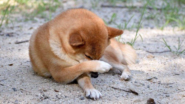 犬が顔や体をカキカキする心理5つ