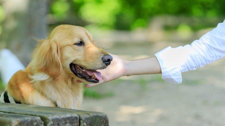 犬がなつく人、なつかない人の特徴