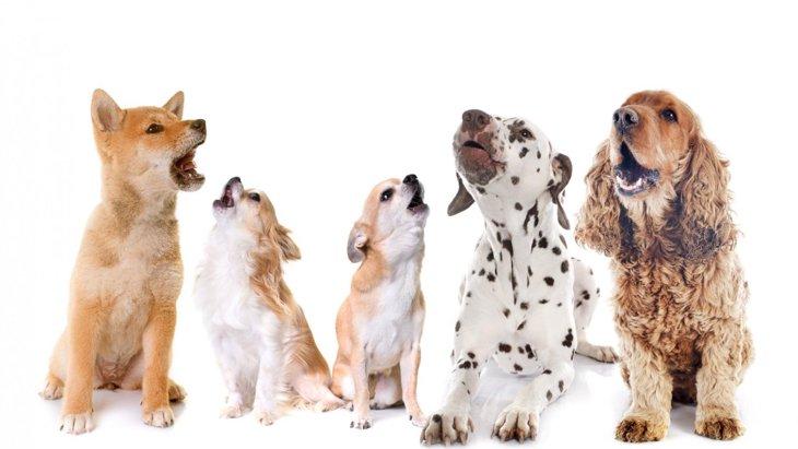 犬が『朝鳴き』をするのはなぜ?4つの理由と対策とは?