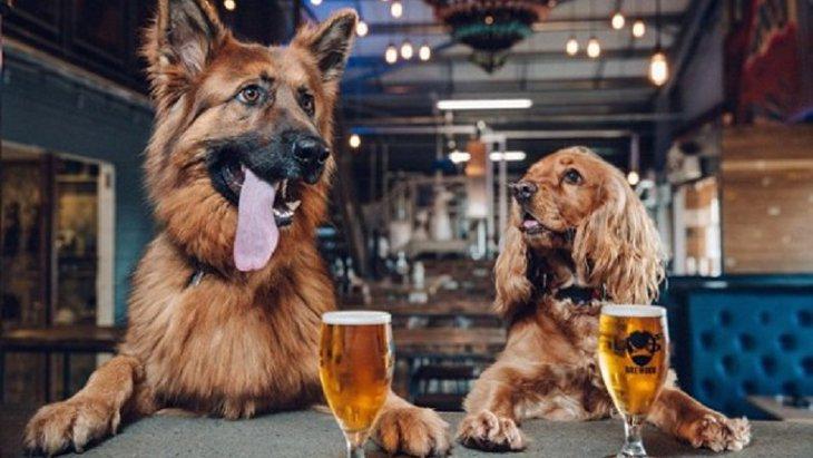 新たに犬を家族として迎えると『育犬休暇』が貰える夢の様な会社