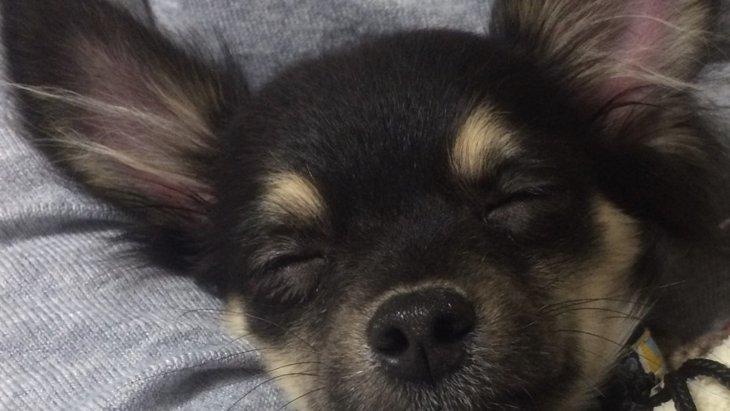 保護犬を迎えるのは難しいことじゃない!里親募集サイトで見つけた愛犬との出会い
