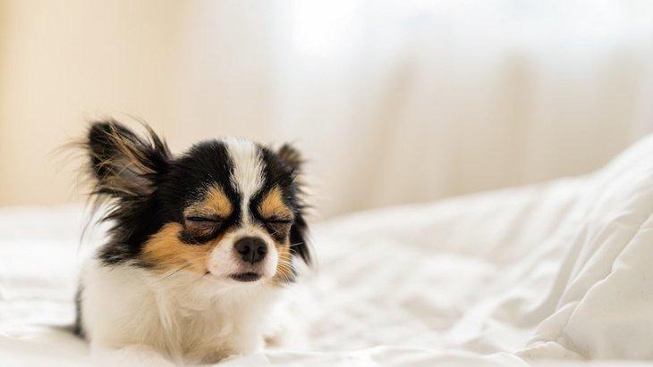 犬が眠りそうなときに見せる7つのカワイイ仕草