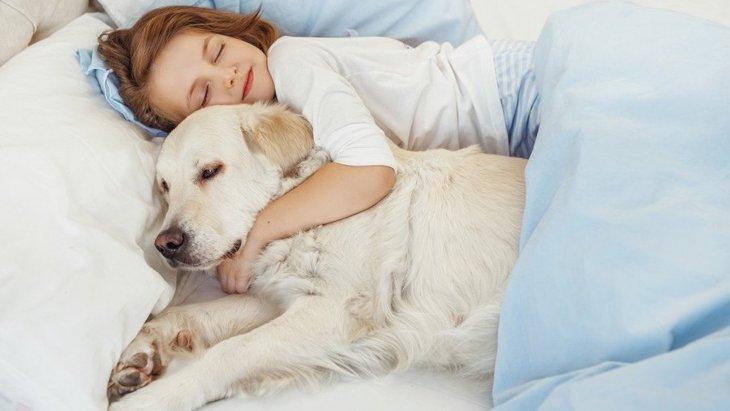 犬と一緒に寝ても大丈夫?注意点とは