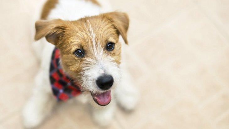 犬が懐かない時の原因4選!どうすれば仲良しになれるの?