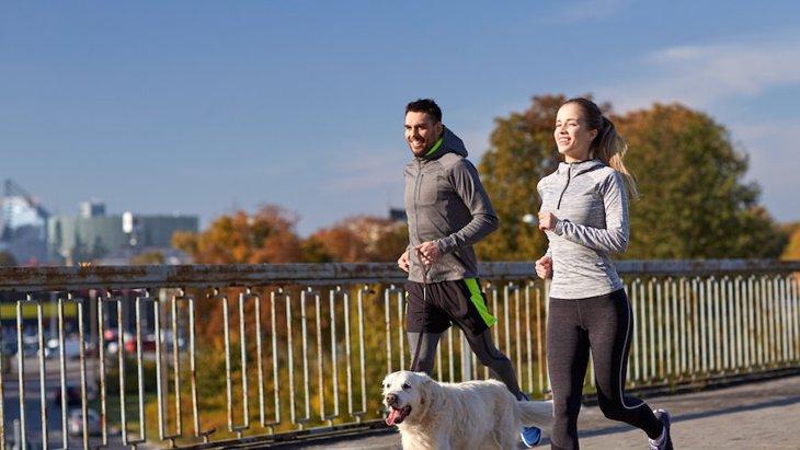 犬の飼い主の運動量の研究と、その社会的な役割