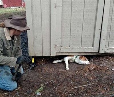 体が挟まり身動き取れない犬・・・救出した男性に感謝のキスが止まらない!