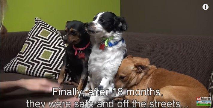 飼い主死亡で路上に放り出された3匹の犬。1年半ずっと帰りを待っていた