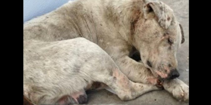 骨折、腫瘍、皮膚感染、栄養失調。ボロボロだった犬に輝きが戻ってきた!