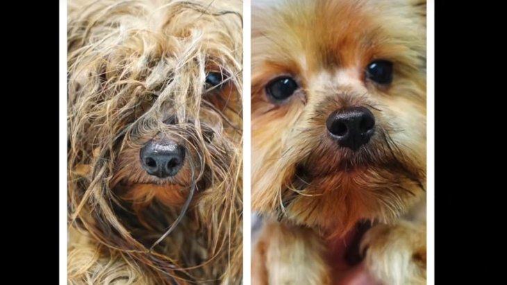 子犬工場から救い出された犬のビフォー・アフターがすごい!
