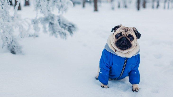 愛犬に着心地の良い洋服を選ぶためのポイント5つ