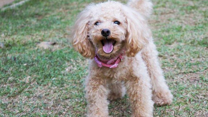 病気で歩けなかった捨て犬さん。いまは幸せですか?