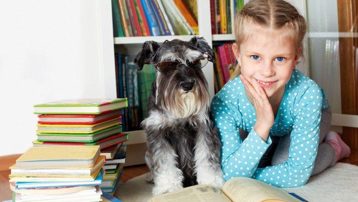 犬の賢さの秘密が解明?最新の研究で判明した驚くべき理解力とは