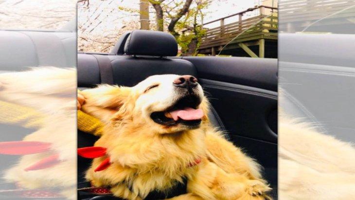 「やっほーい!」初オープンカーを満喫するゴルさん♡笑顔が話題!