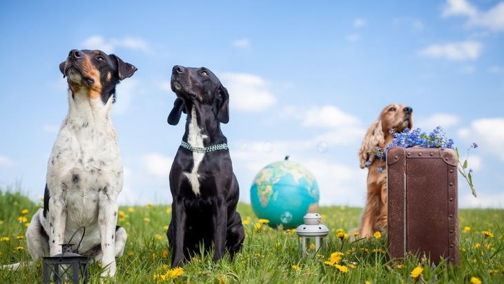 犬への意識が高い国3選!世界で行われているワンコへの取り組み