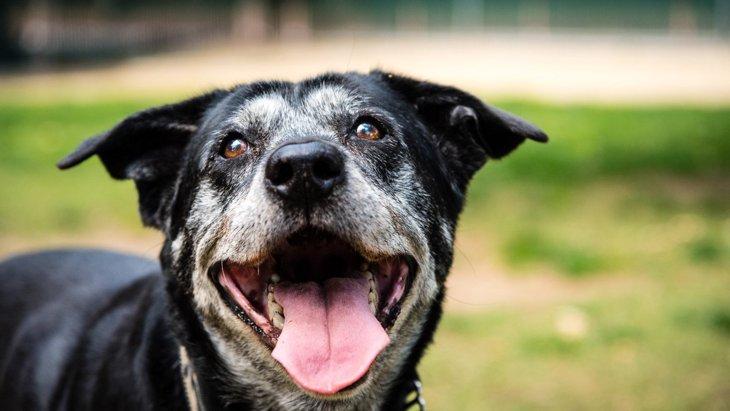 『長生きする犬とそうでない犬』の違い3選