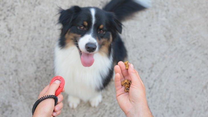クリッカー訓練中の報酬を減らすと犬の感情に影響を与えるという研究結果