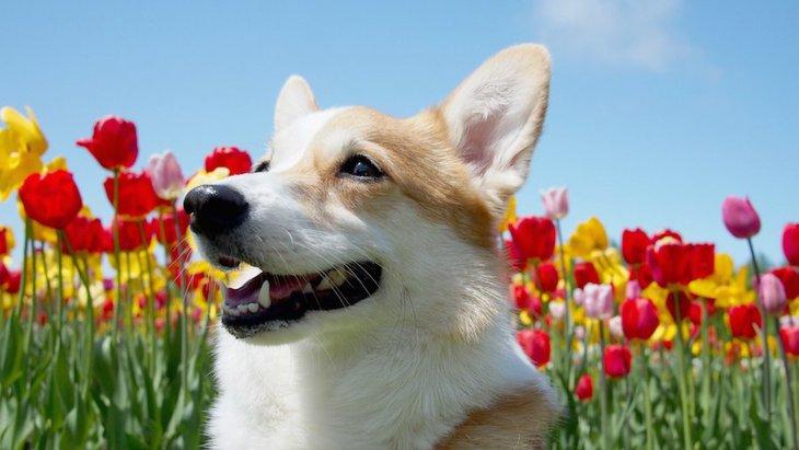 お散歩をたくさんする必要がある犬種6選