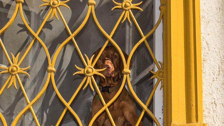 犬は留守番を12時間以上できる?超長時間のお留守番が生む2つのリスク
