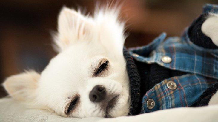 犬が『いじけている時』によくする仕草や態度5選
