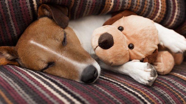 犬にぬいぐるみのおもちゃを与える際の注意点