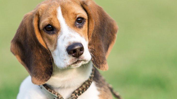 犬が散歩中に他人に興味を持つ心理3つ